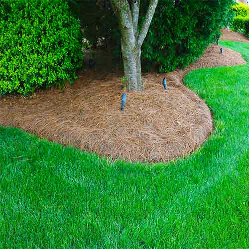 Pine Needle Edging